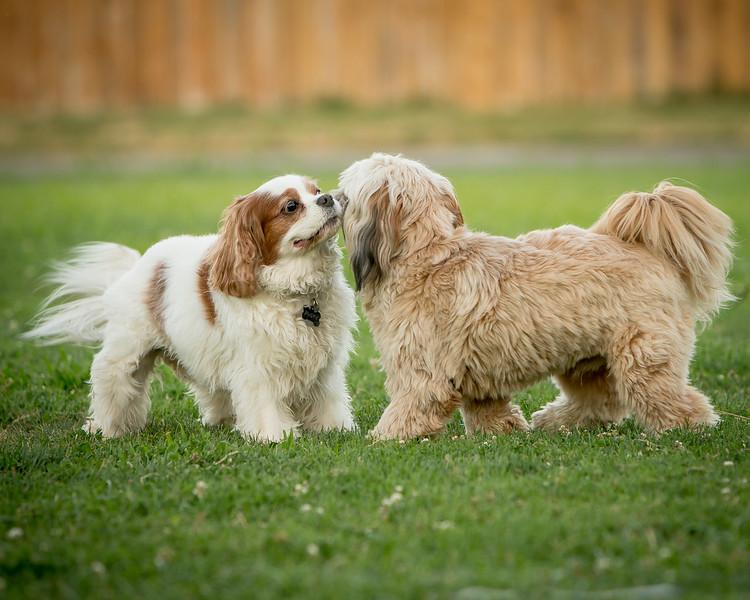 Rusty & Doggie