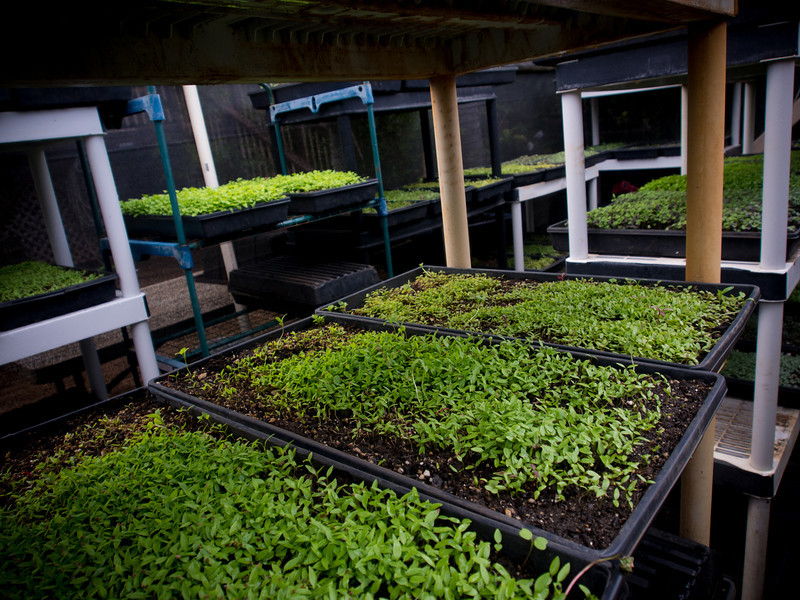 escargot sprouts 2.jpg