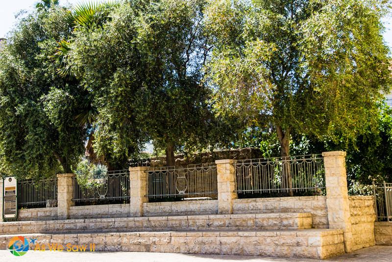 Haifa-0813.jpg