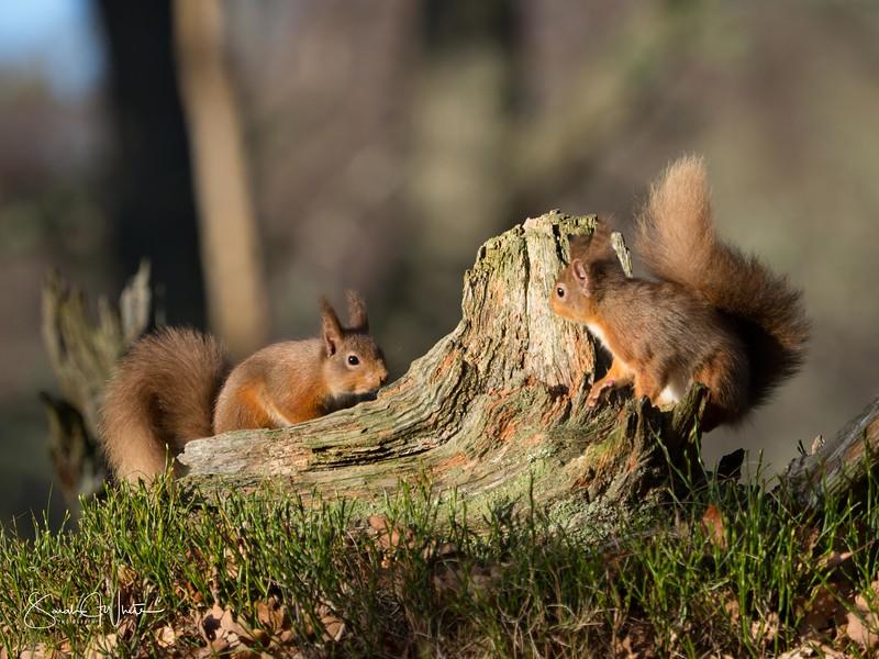 RedSquirrelBootCamp_130217_376.jpg