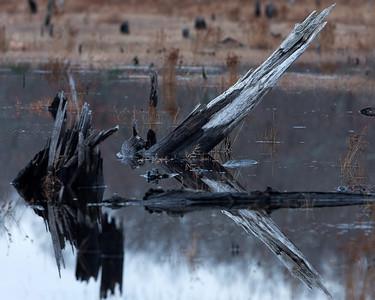 Black Spruce Pond