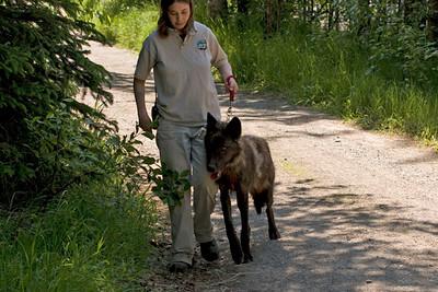 WALKING THE DOG!
