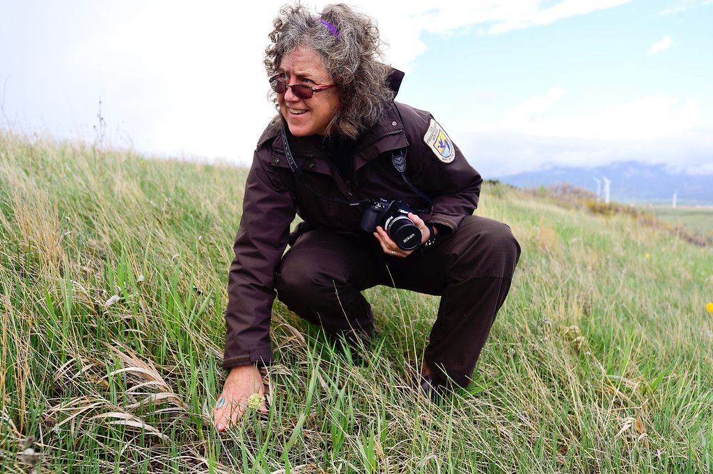 . U.S. Fish and Wildlife Supervisory Ranger Cindy Souders kneels to examine an unfamiliar plant at the Rocky Flats National Wildlife Refuge in Jefferson County, Colorado on May 14, 2018. (Photo by Matthew Jonas/Staff Photographer)