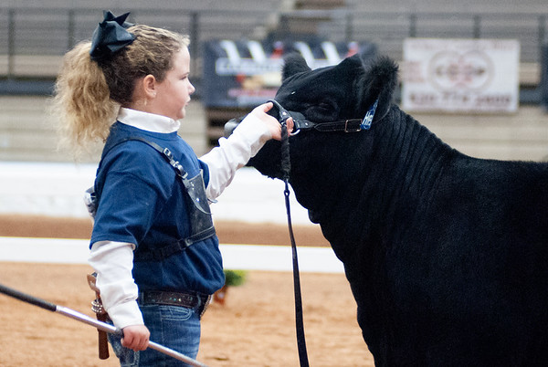 American Royal Cattle Showmanship