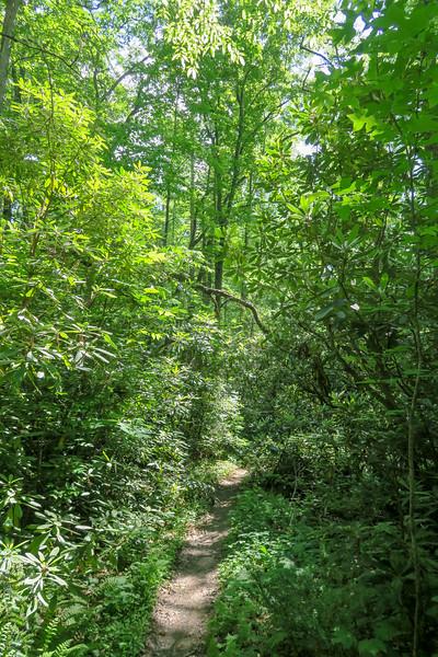 Bradley Creek Trail -- 2,530'