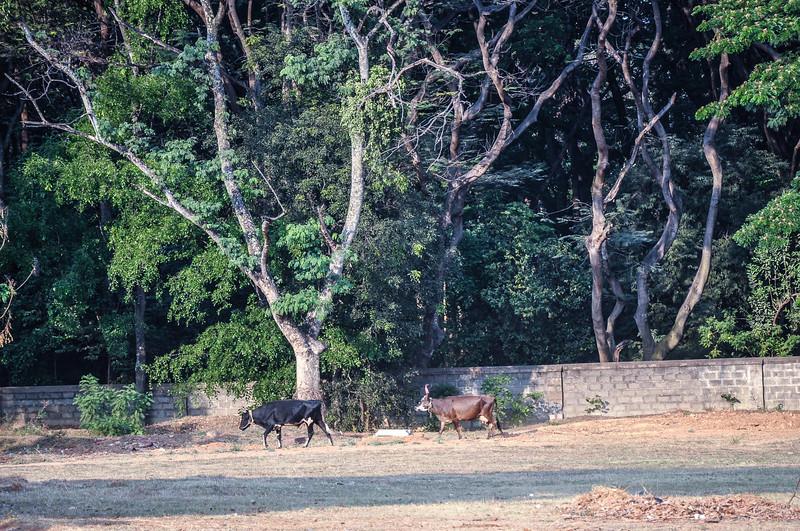 2014-03 Bangalore 007.jpg