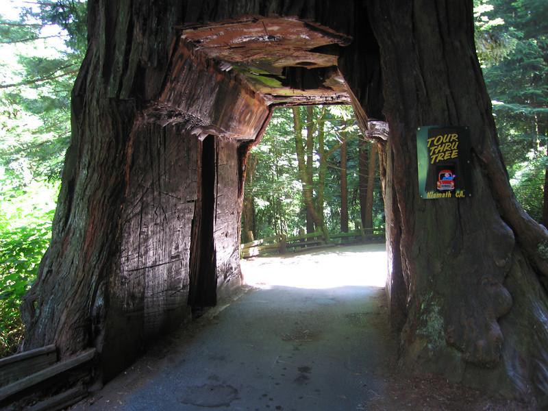 Klamath drive thru tree