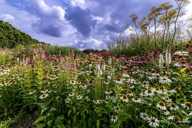 500_Sussex Prairie Gardens-3725.jpg