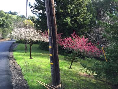 Scenes of spring 2016