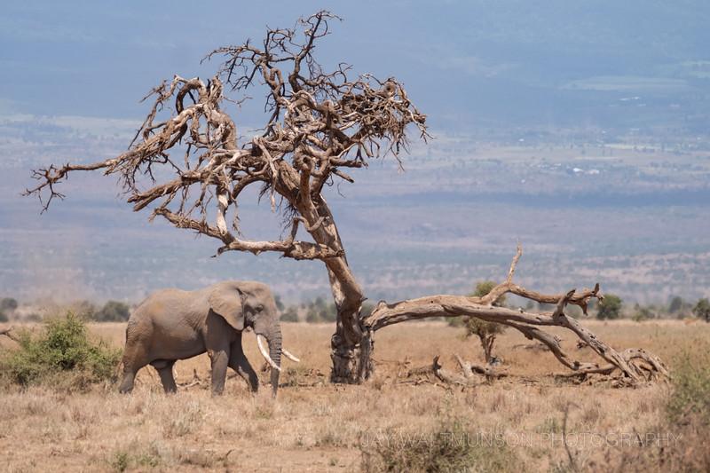 Jay Waltmunson Photography - Kenya 2019 - 157 - (DSCF4599).jpg