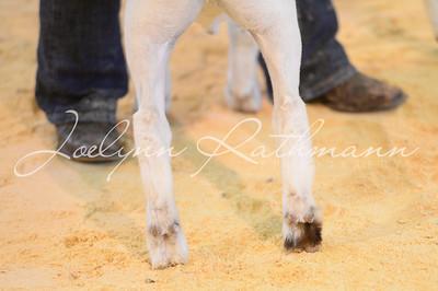 Goat Ringshots 1