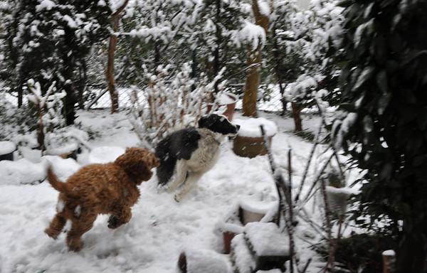 Snow in Moriya - 14 Jan 2013