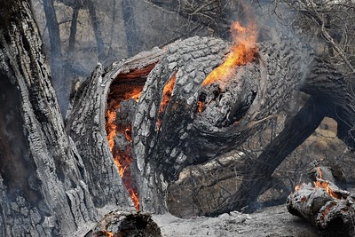 Highline Canal Trail Fire March 9, 2021