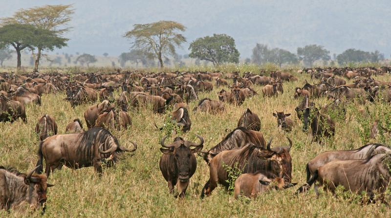 East Africa 2007