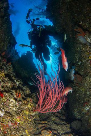 Pt. Loma Submariner Main Channel November 14