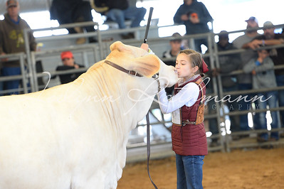 Commercial Heifer Ringshots - Non-Brahman, Grand Drive and Showmanship