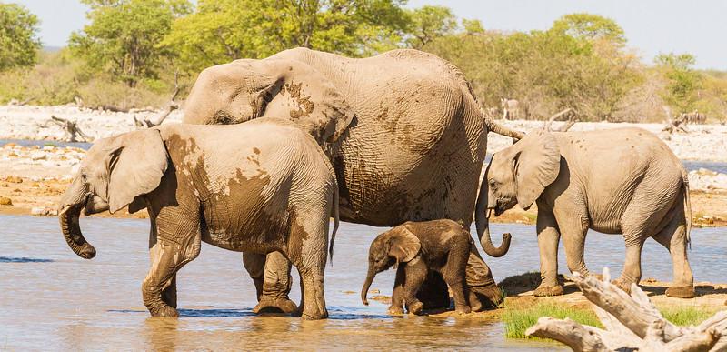 Baby Elephant 15