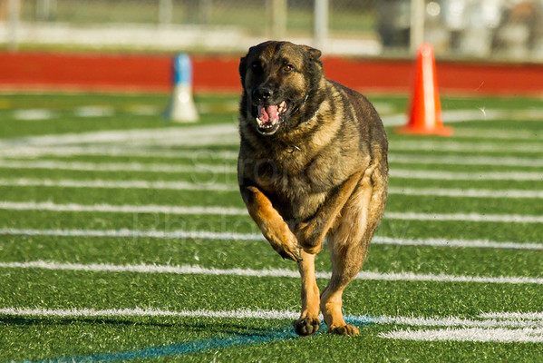 K9 Competitions