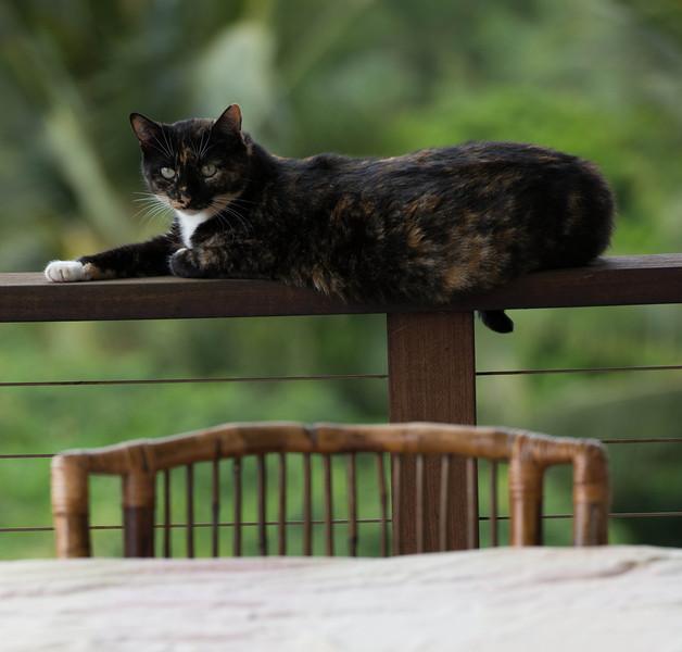 Kitty-2.jpg