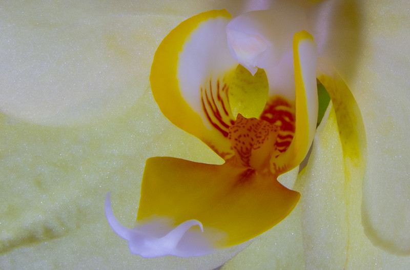 orchid (2 of 2).jpg