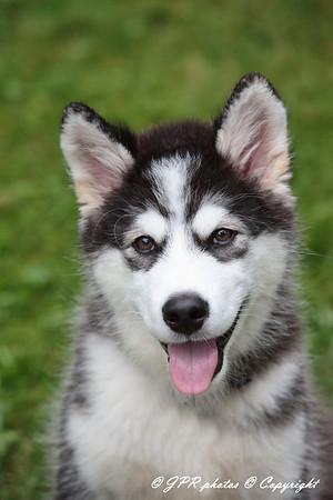 Ken's New Puppy