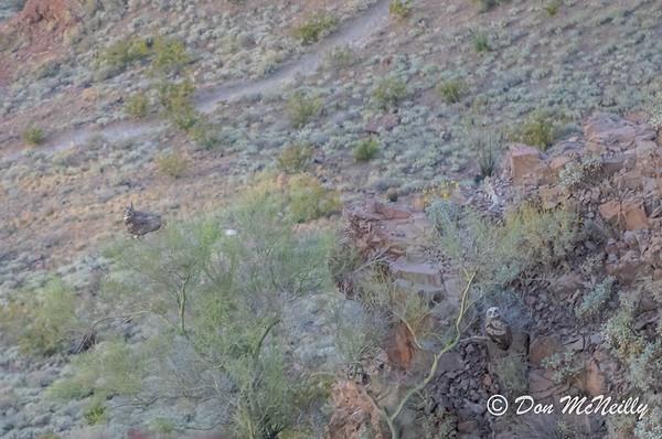 Lookout MNt Phoenix AZ 4-2020