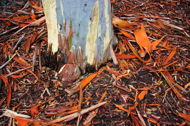 Bark at the foot of a tree.