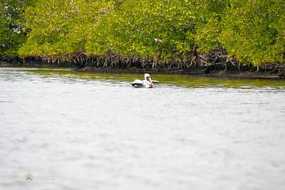 February 9th Kayaking Adventure!