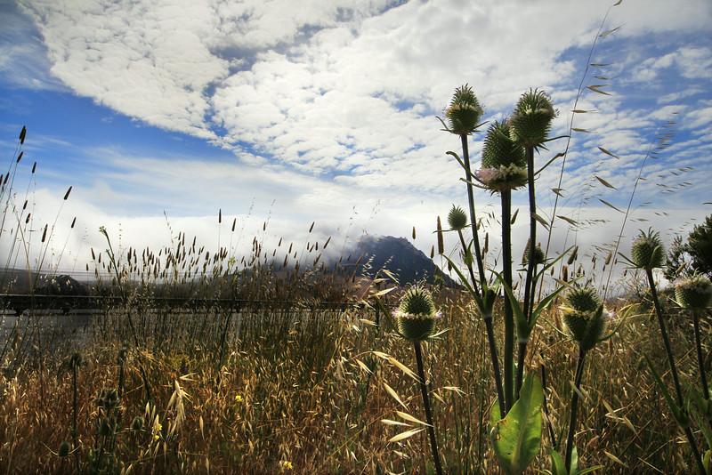 flowering desert in the misty mountains 2.jpg