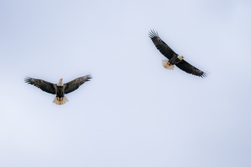 Eagle  1AE No WM-8.JPG