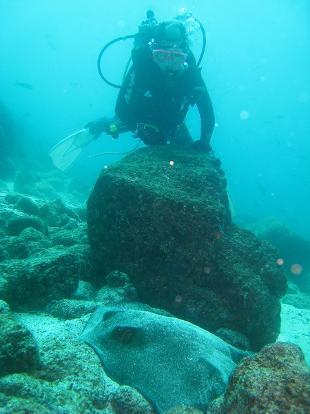 Diving in the Galapagos (167 of 392)