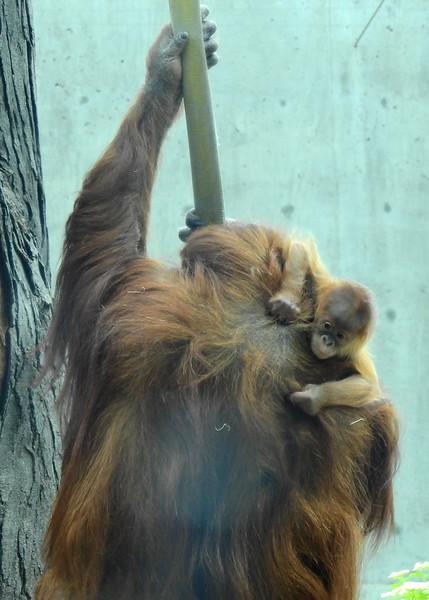 Denver Zoo 2018 (2702).JPG