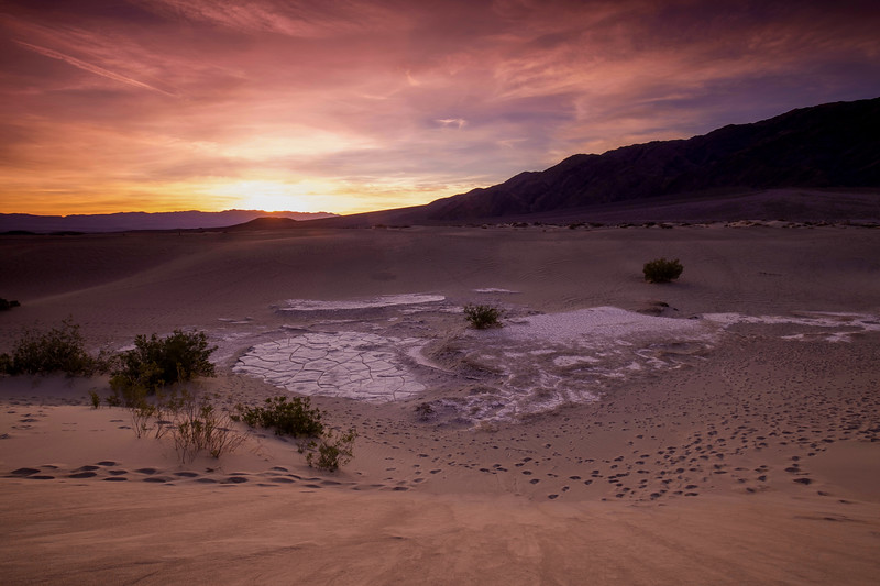 Footprints In Sunrise, Mesquite Flats