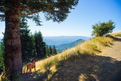 Oregon, Summer 2017