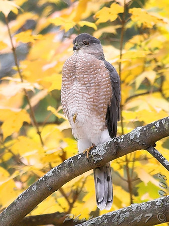"""2008 """"November"""" Yardbirds"""