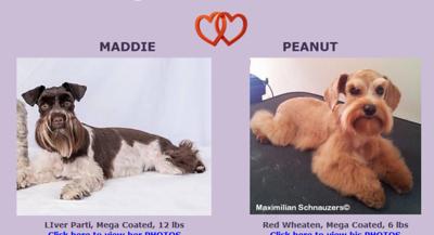 Maddie & Peanut Puppies, DOB 4/24/2017