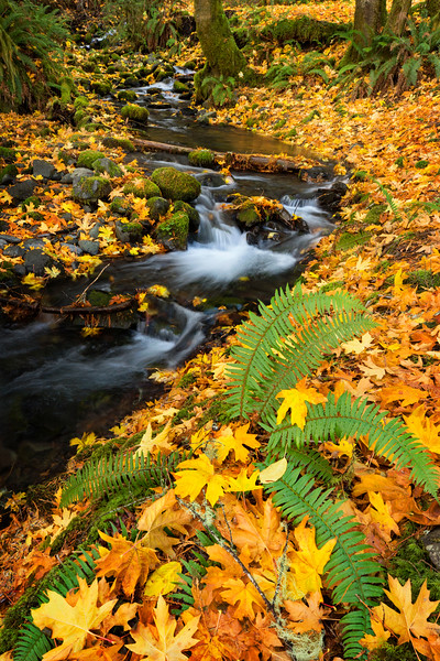 creek in leaves.jpg