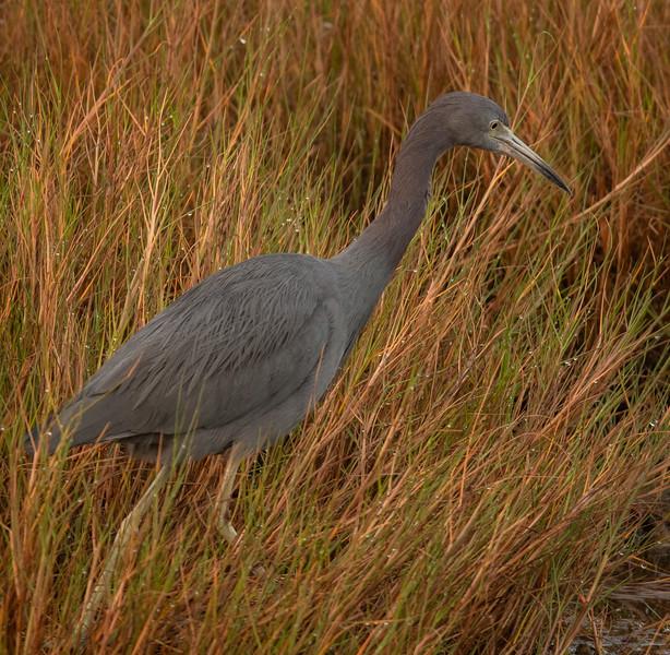 Merritt Island National Wild Life Refuge and Blue Heron Wetlands - October 5, 2021