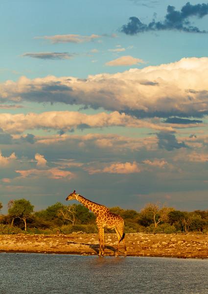 Glowing giraffe