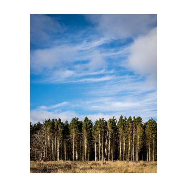 302_Trees_10x10.jpg