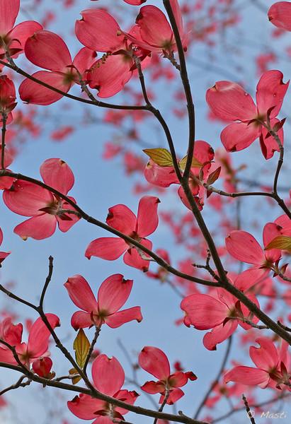 pink-vert3.jpg