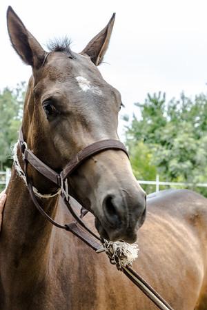Ahalteke Breed Horse Farm - Turkmenistan