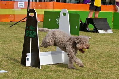 Sutherland Shire Dog Training Club