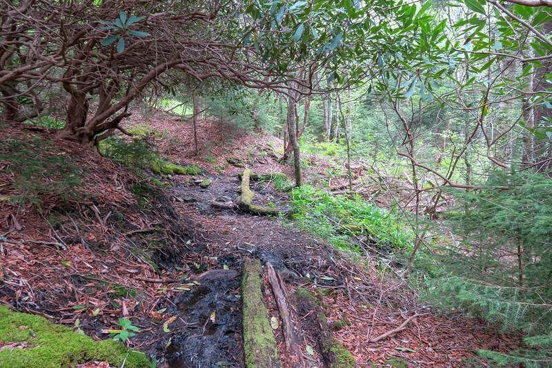 Mountains-to-Sea Trail -- 5,630'