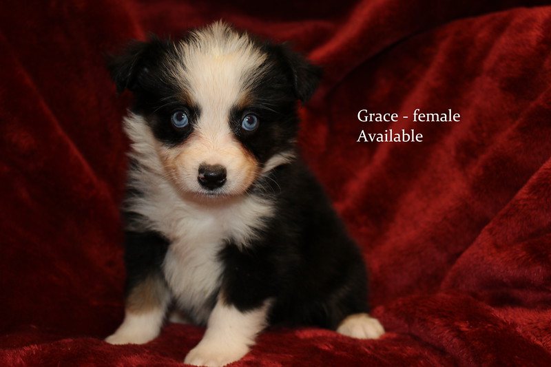 Grace has been reserved