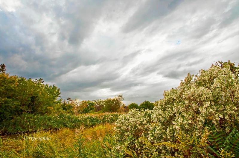 Sept 20_Mill Creek Marsh_0376.jpg