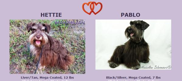 Hettie & Pablo's Puppies, DOB 4/11/2018