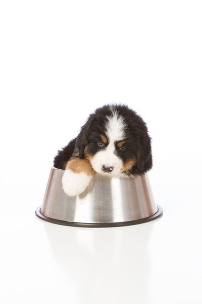 2013-Pearson Pups-Jun02-0374.jpg