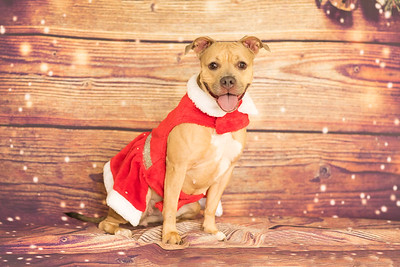 Mcspca holiday
