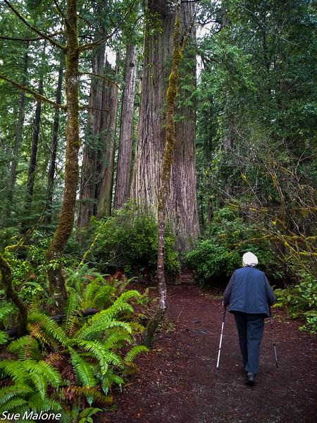 02-13-2021 Redwoods and Coast from Deborah-28.jpg